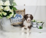 Image preview for Ad Listing. Nickname: Puppy #4