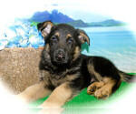 Image preview for Ad Listing. Nickname: German Shepherd