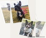 Gorgeous pups from AKC health Tested parents