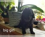 Image preview for Ad Listing. Nickname: Big Girl