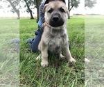 Small #55 German Shepherd Dog