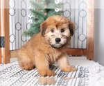 Small #3 Soft Coated Wheaten Terrier