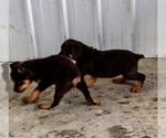 Small #47 Rottweiler