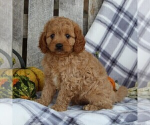Cavapoo Puppy for sale in LEOLA, PA, USA