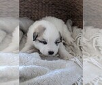 Small #45 Great Pyrenees