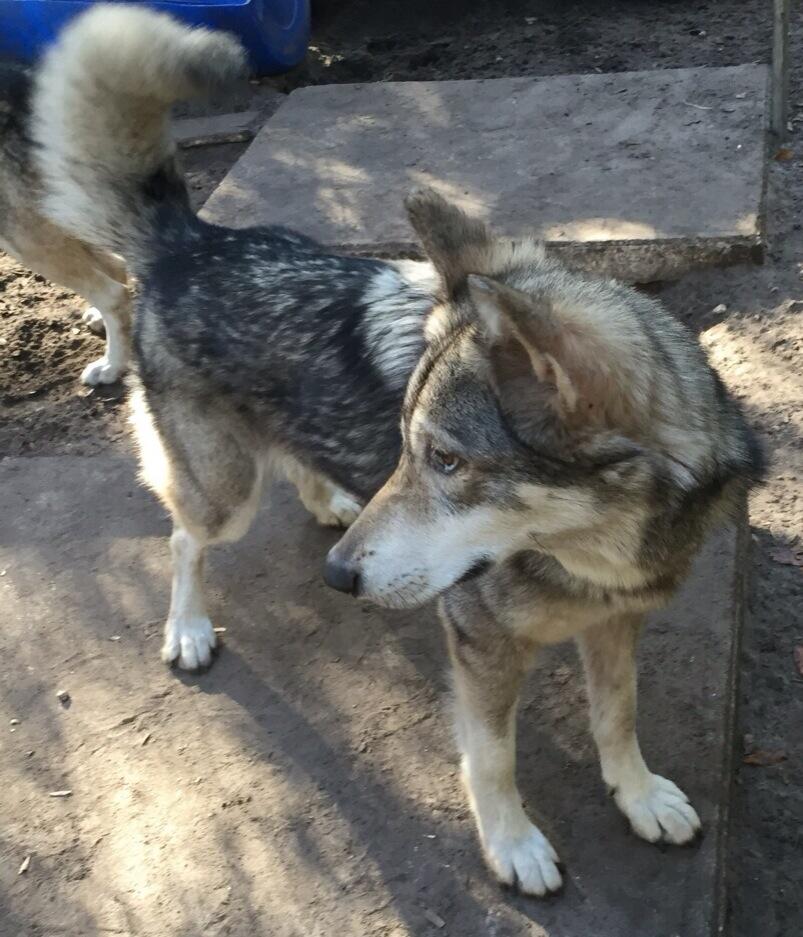Dog Adoption Shelters Orlando Fl