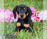 Image preview for Ad Listing. Nickname: Sasha