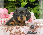 Image preview for Ad Listing. Nickname: Nacho