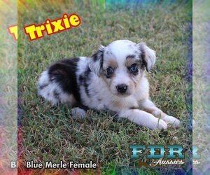 View Ad: Miniature Australian Shepherd Puppy for Sale near Texas