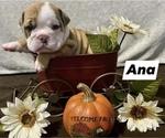 Image preview for Ad Listing. Nickname: Ana