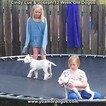 Small Photo #191 Dogo Argentino Puppy For Sale in PINEVILLE, MO, USA