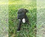Small #8 Staffordshire Bull Terrier