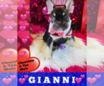 Image preview for Ad Listing. Nickname: GIANNI