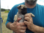 Clyde the Miracle Pug