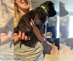 Small #9 Dutch Shepherd Dog