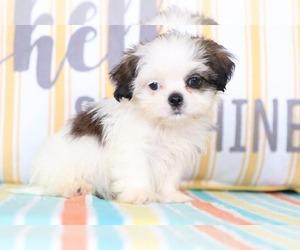 View Ad Shih Tzu Puppy For Sale Near Ohio Mount Vernon