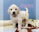 Image preview for Ad Listing. Nickname: Peaches