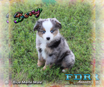 Image preview for Ad Listing. Nickname: Berry