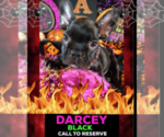 Image preview for Ad Listing. Nickname: DARCEY