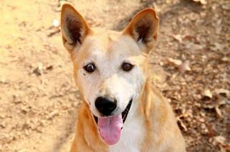 Mooney - Husky / Shepherd / Mixed Dog For Adoption