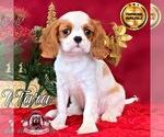 Image preview for Ad Listing. Nickname: Tara