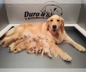 Puppies For Sale Near New Milford New Jersey Usa Page 1