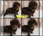 Image preview for Ad Listing. Nickname: Puppy #1 Yellow