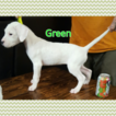 Dogo Argentino Puppy For Sale in PLACERVILLE, CA, USA