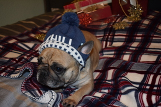 French Bulldog Dog For Adoption in SACRAMENTO, CA