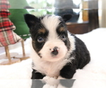 Image preview for Ad Listing. Nickname: Puppy #1 (Sold)