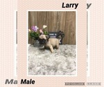 Image preview for Ad Listing. Nickname: Larry