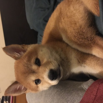 Menifee Dogs For Adoption