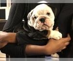 Small #1 Bulldog