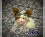 Image preview for Ad Listing. Nickname: AKC Oliver