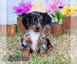 Image preview for Ad Listing. Nickname: Sprinkles