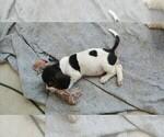 Small #2 Basset Hound