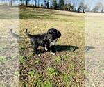Small #13 Portuguese Water Dog