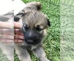 Small #27 German Shepherd Dog