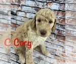 Image preview for Ad Listing. Nickname: Puppy #1 Cory