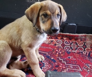 Puppies For Sale Near West Kennebunk Maine Usa Page 1 10