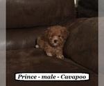 Small #4 Cavapoo