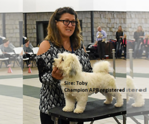 Havanese Puppy for sale in DREXEL, MO, USA