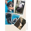 German Shorthaired Pointer Puppy For Sale in HARBINGER, NC