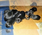 Small #31 Rottweiler
