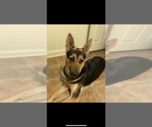 German Shepherd Dog Dog for Adoption in RIVERSIDE, California USA