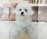 Image preview for Ad Listing. Nickname: popo