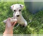 Small #5 Dalmatian