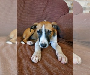Mutt Dog for Adoption in GILMER, Texas USA