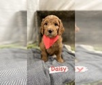 Image preview for Ad Listing. Nickname: Puppy #7 Daisy