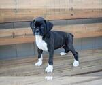Small #15 Boxer